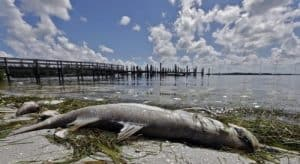 How to avoid Sanibel Island Red Tide